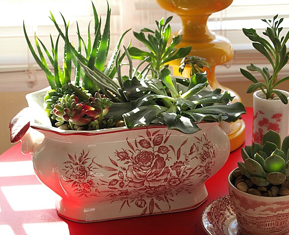 how to make an indoor succulent dish garden