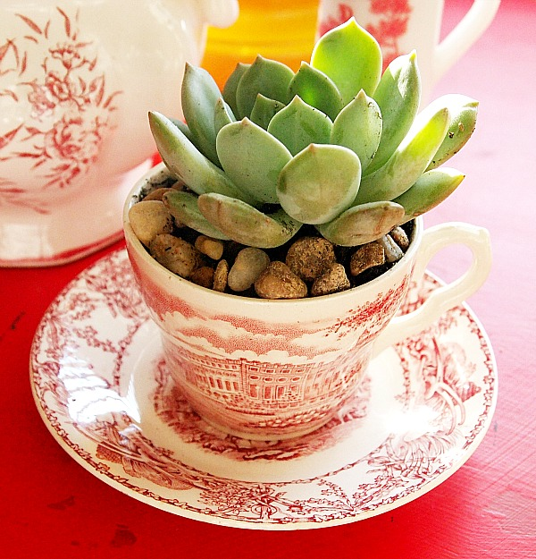 succulent planted in a red transferware teacup