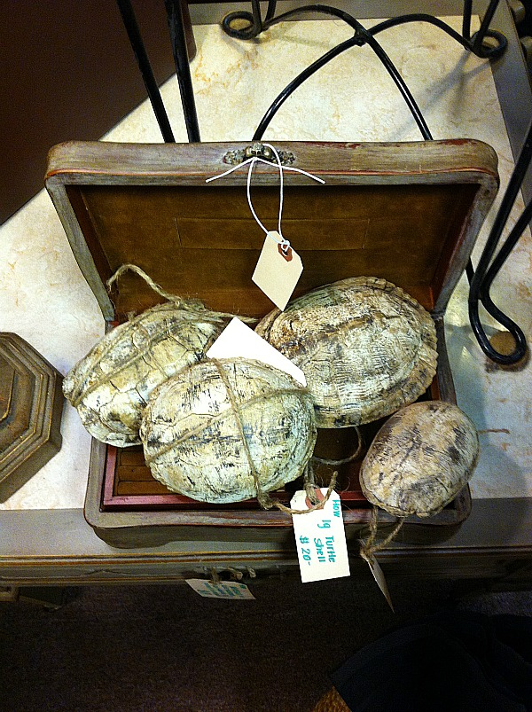 turtle shells for sale