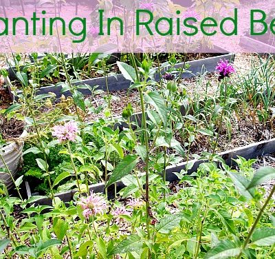 planting in a raised bed