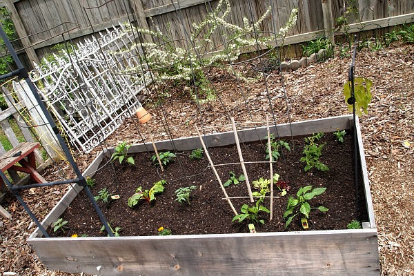 raised bed companion planted