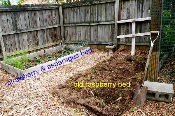 strawberry-asparagus-bed