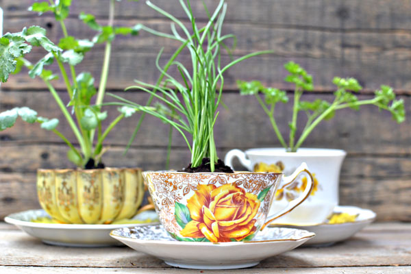 herbs planted in tea cups