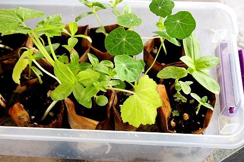 seeds grown in newspapers