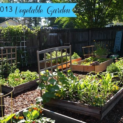 raised bed vegetable garden