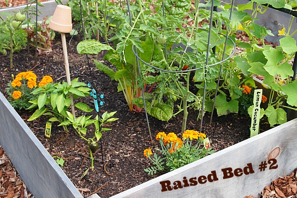 Companion Planted Raised Vegetable Bed