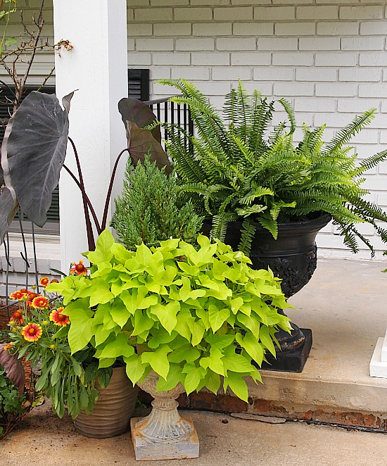 containers planted with ferns and flowers