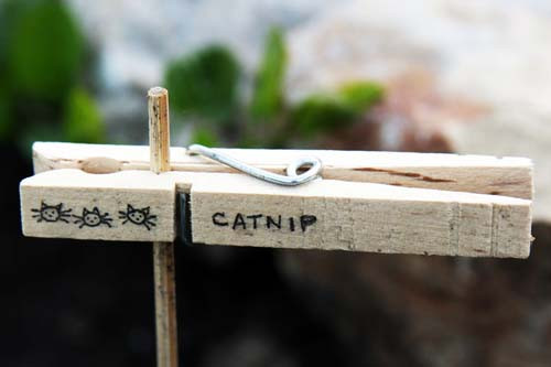 clothespin plant marker