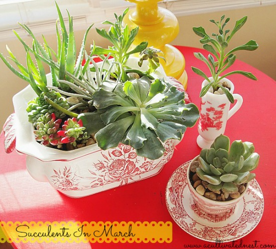 A Cultivated Nest: Indoor succulent garden in red transferware