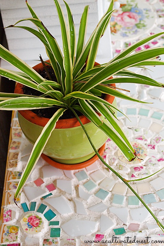spider plant on a mosaic table