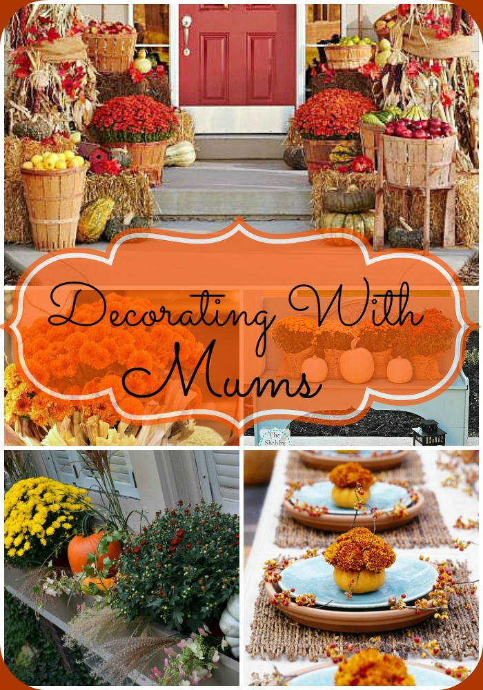 Decorating With Mums - Mums are the perfect flower to decorate your home for fall! If you're looking for some pretty fall mum decor inspiration, you have to check out these great ideas! | autumn decor, fall flowers, #flowers #decor #fall #autumn #decorating #mums #chrysanthemums