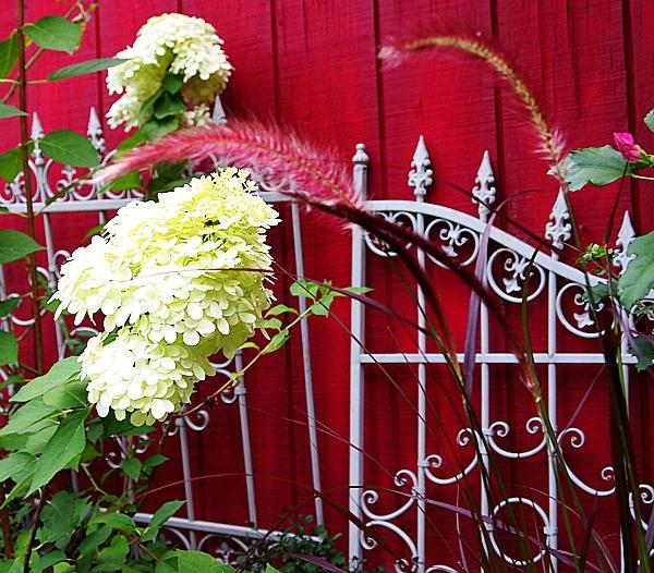 ornamental grass & hydrangea
