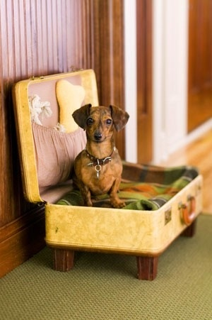 15 Ways To Repurpose A Suitcase - suitcase dog bed