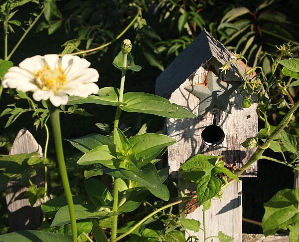 birdhouse covered in morning glories and zinnias