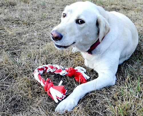 Repurposed t-shirts made into a dog toy - How To Repurpose Old T-Shirts