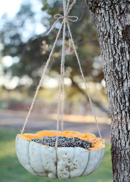 pumpkin filled with bird seed (10 easy homemade birdseed feeders)