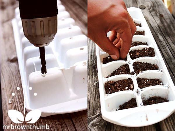 10 Repurposed Seed Starting Tray Ideas- Ice Cube Tray- Start your seeds the frugal way with these 10 DIY upcycled seed starting containers! So many inexpensive everyday items can make great seed starters! | DIY seed starting container hacks, how to start seeds, frugal gardening, save money on gardening, gardening tips, upcycled seed starting containers, gardening hacks #gardening #seedStarting #ACultivatedNest