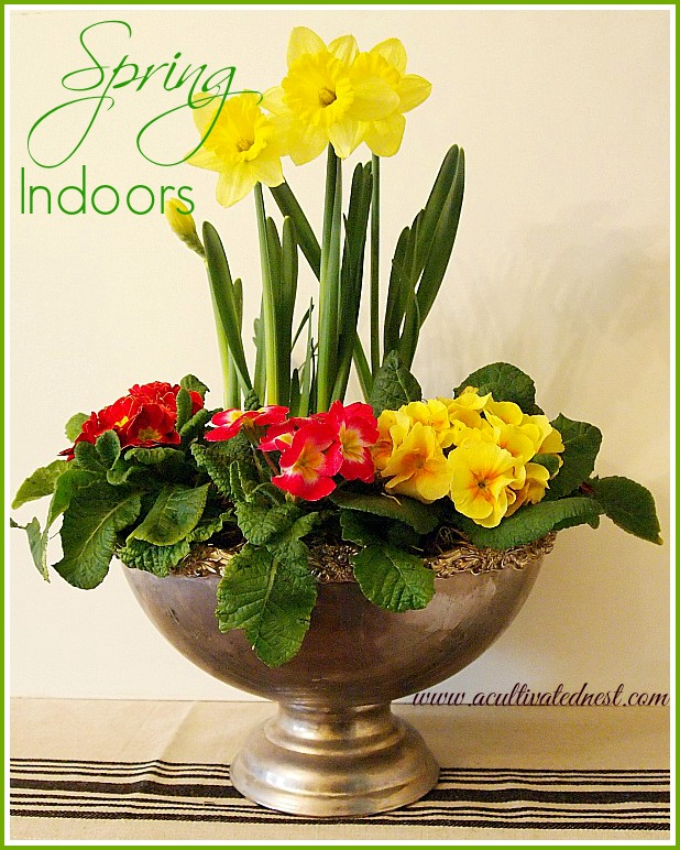 Easy DIY Garden Project to cheer the soul during winter! This is such an easy way to decorate with spring flowers indoors. How to make an indoor spring garden planter | Indoor gardening| indoor plants| decorating for spring | Spring decorating ideas