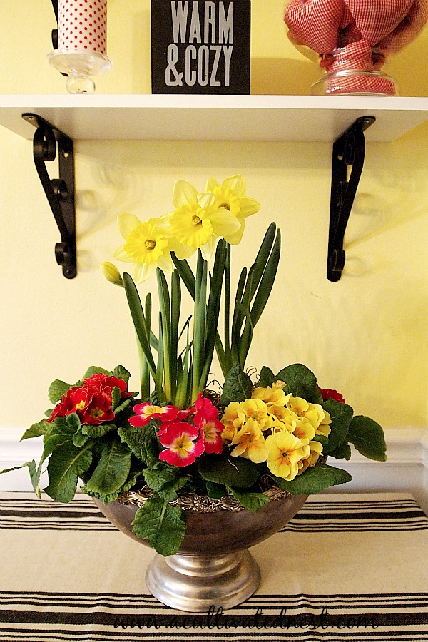 Indoor spring garden of daffodils and primroses