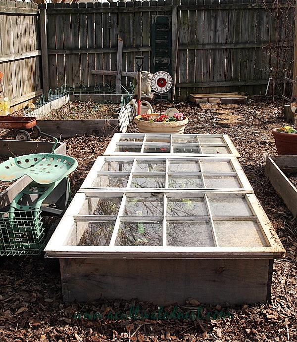 old windows used on a raised bed to make a cold frame