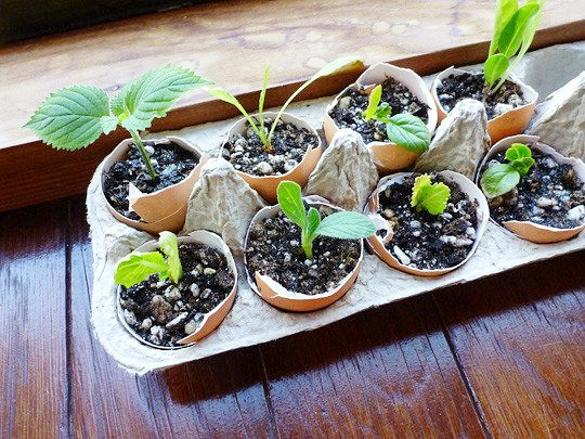 10 Genius DIY Seed Starting Containers- Eggshells- Start your seeds the frugal way with these 10 DIY upcycled seed starting containers! So many inexpensive everyday items can make great seed starters! | DIY seed starting container hacks, how to start seeds, frugal gardening, save money on gardening, gardening tips, upcycled seed starting containers, gardening hacks #gardening #seedStarting #ACultivatedNest