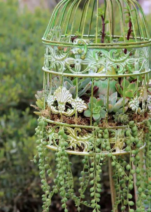 11 Beautiful Ways to Display Succulents- If you want to decorate with plants, but want something easy to maintain, then you need to use succulents! For some great inspiration, check out these pretty ways to decorate with succulents! It's easy to make a beautiful succulent garden!   succulent container ideas #succulents #homeDecor #housePlants #indoorGardening #ACultivatedNest