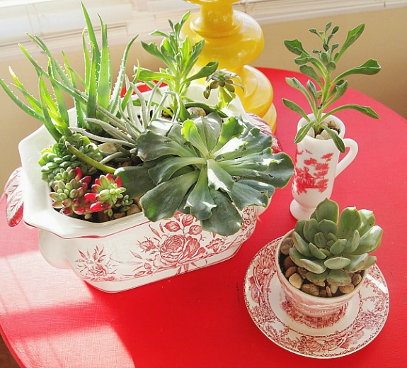 succulent garden in red and white transferware dishes