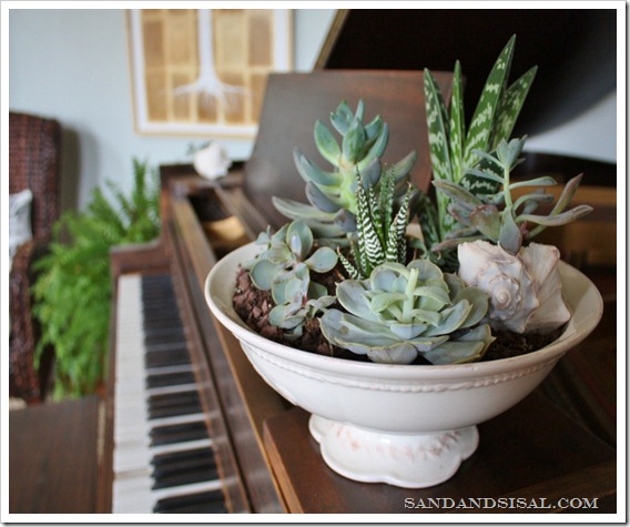 Simple footed bowl planted with succulents by Sand & Sisal