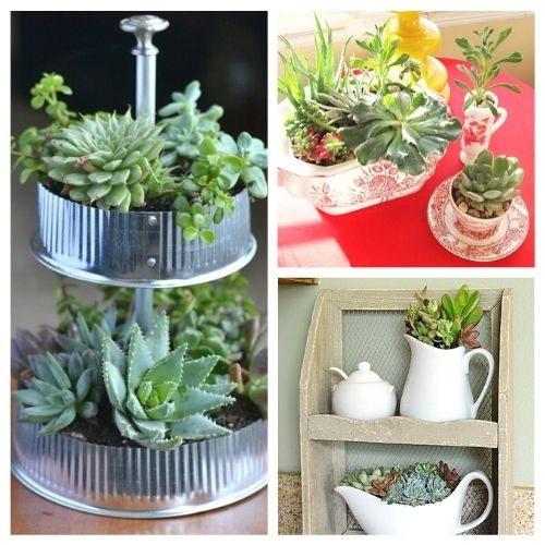 11 Beautiful Ways to Decorate With Succulents- Because succulents come in so many different shapes, sizes and colors, it's easy to decorate with them!For some clever ways to incorporate them in your home's decor, take a look at these indoorsucculent container ideas!   #succulents #decorating #housePlants #indoorGardening #ACultivatedNest