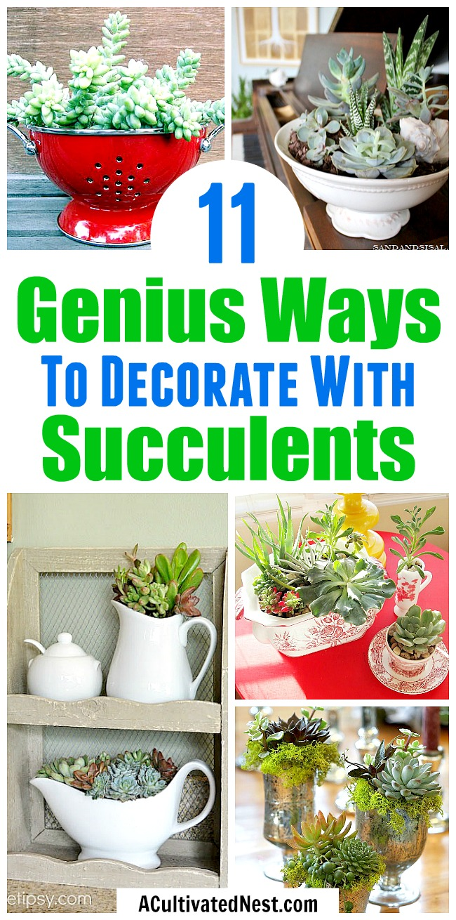 11 Beautiful Ways to Decorate With Succulents- Because succulents come in so many different shapes, sizes and colors, it's easy to decorate with them!For some clever ways to incorporate them in your home's decor, take a look at these indoorsucculent container ideas! | #succulents #decorating #housePlants #indoorGardening #plants #decor