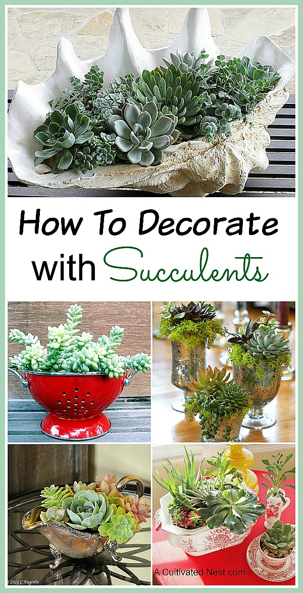 11 Beautiful Ways to Decorate With Succulents- Succulents come in so many different shapes, sizes and colors that it's easy to make a beautiful succulent garden! Check out these indoor succulent container ideas for some great inspiration! | #succulents #decor #housePlants #indoorGardening #plants #decorating