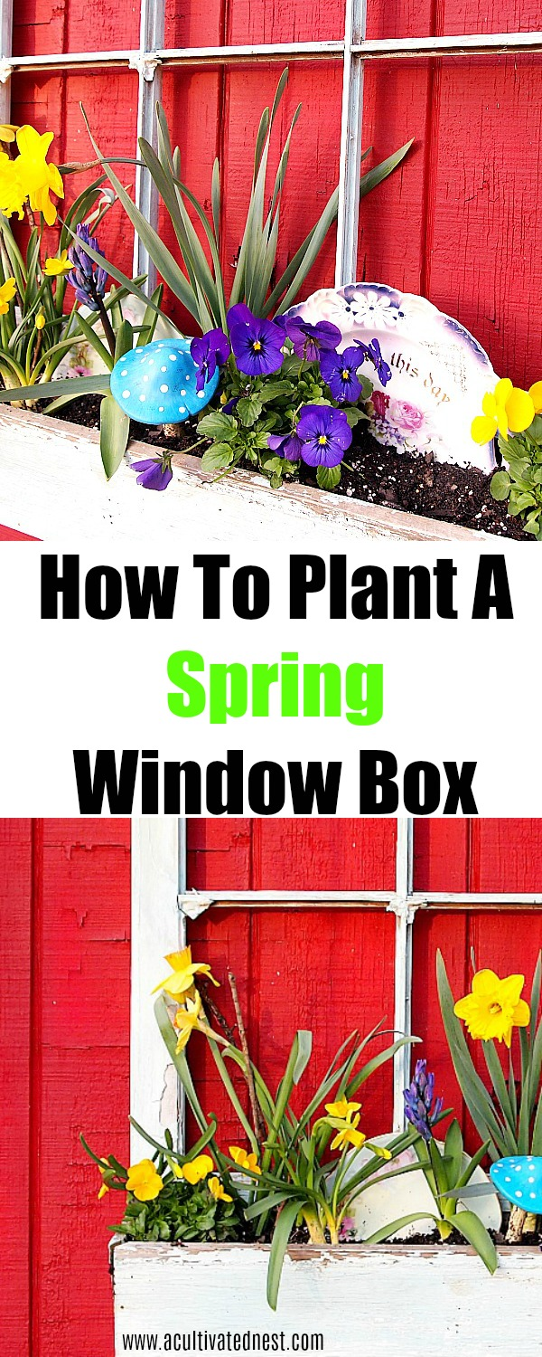 How To Plant A Spring Window Box- So pretty! Tips for plant a spring window box and adding whimsical elements like vintage plates! Spring window box ideas, spring gardening #spring #springgardening #windowbox #acultivatednest
