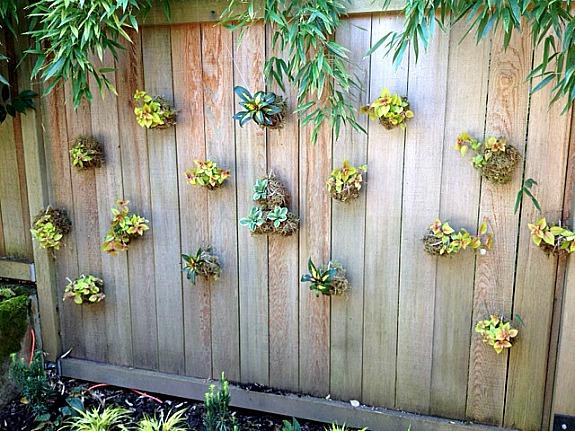"""Outdoor string garden """"Kokedama"""""""