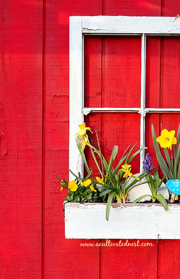 Planting a spring window box - planted with violas, vintage plates & spring bloom bulbs
