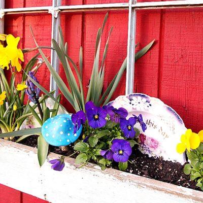 spring window box garden
