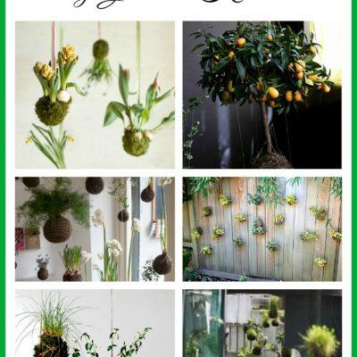 String Garden Inspiration
