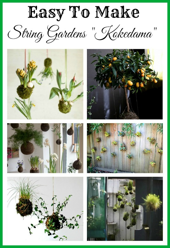 "DIY String Gardens ""Kokedama""- If you want a different sort of indoor garden, then you need to take a look at these DIY kokedama (hanging moss ball planters)! They're easy to make, and look so unique and beautiful! 