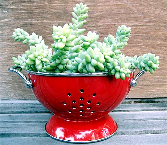 a succulent planted in a red colander