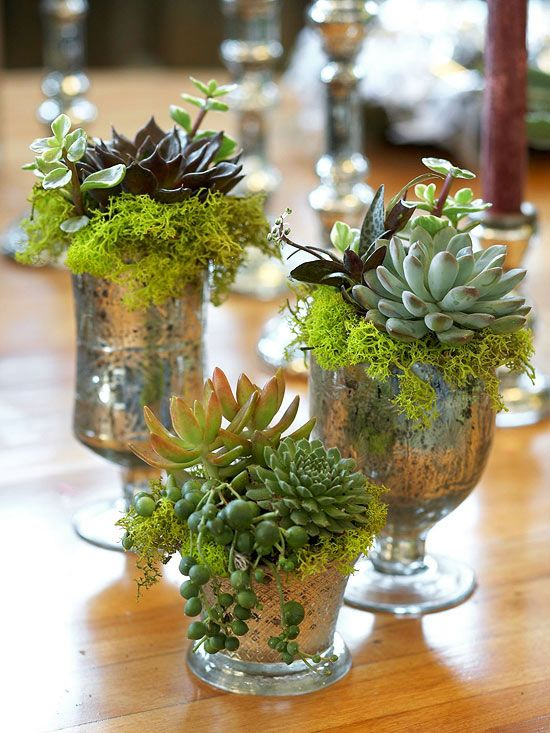 succulents in mercury glass containers
