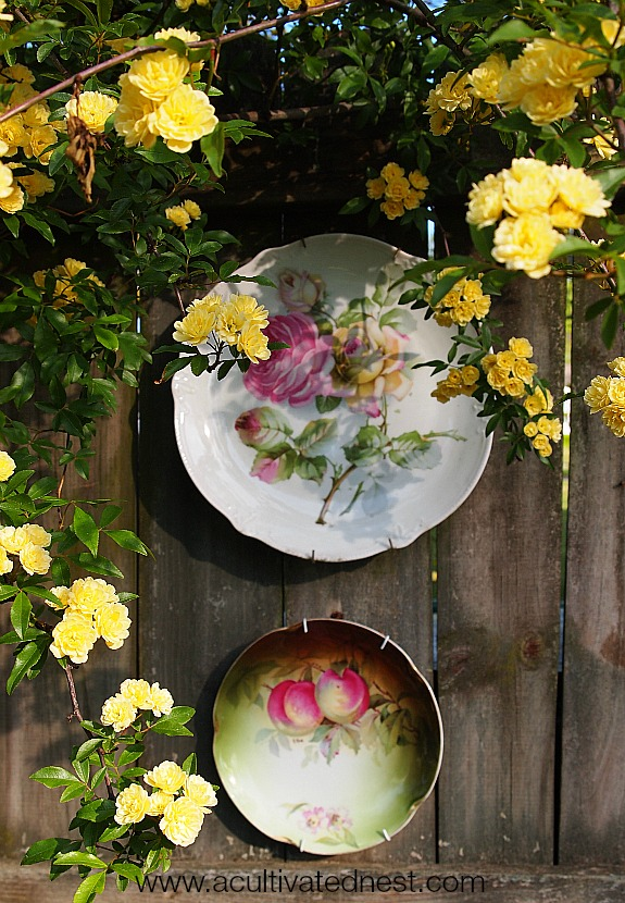 floral plates on the fence and yellow roses