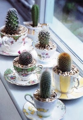 cacti planted in teacups