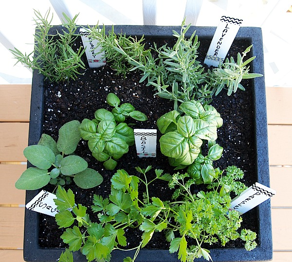 Tips for planting a container herb garden for Container herb garden