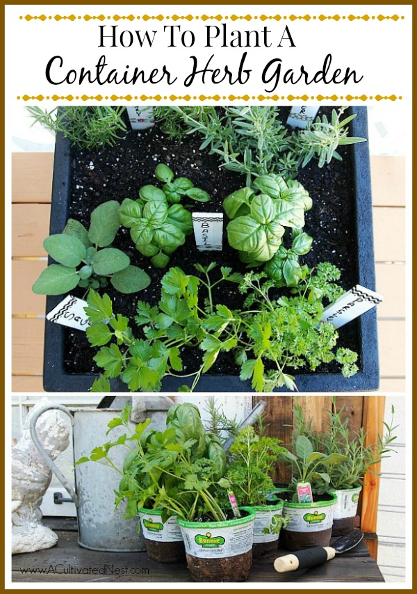 Tips For Planting A Container Herb Garden