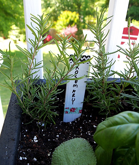 Great Rosemary Planted In A Container Herb Garden
