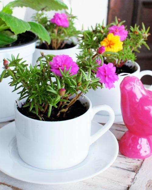 teacup planter pots