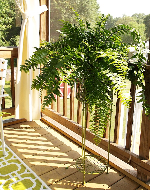 Decorating with a fern on the porch