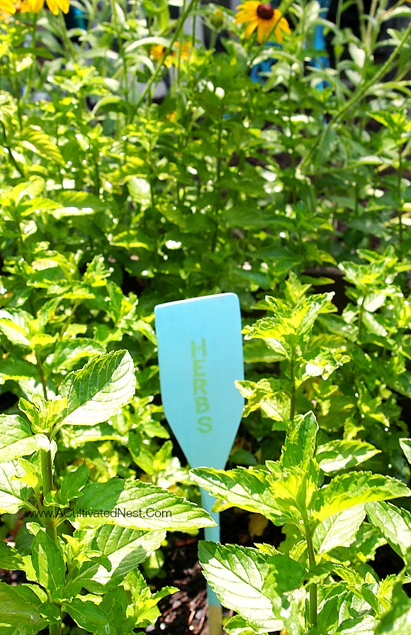 cute herb plant marker made from a wooden spoon