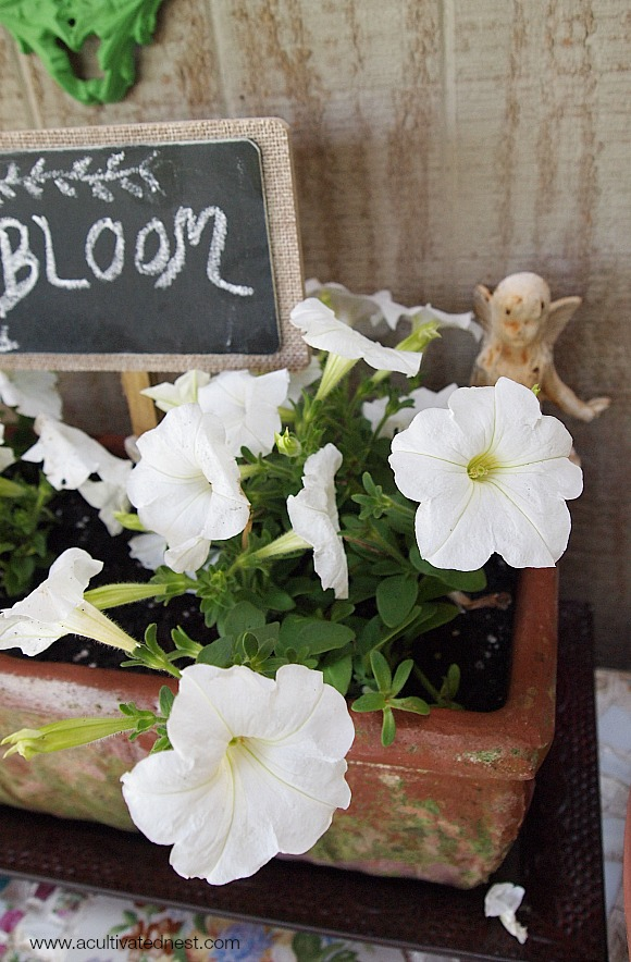 a planter filled with white petunias and a chalkboard plant marker