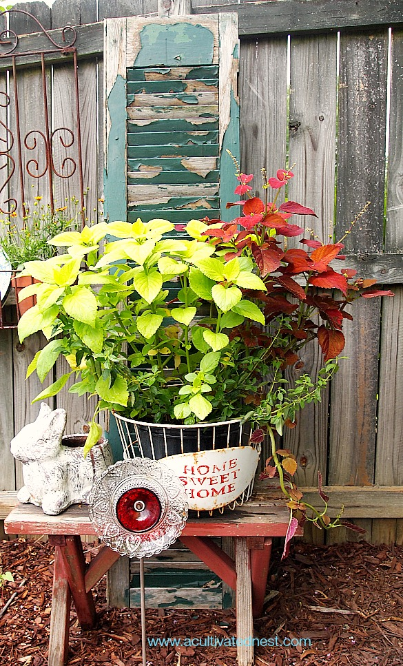 garden display of coleus, old shutter, old bench and plate flower