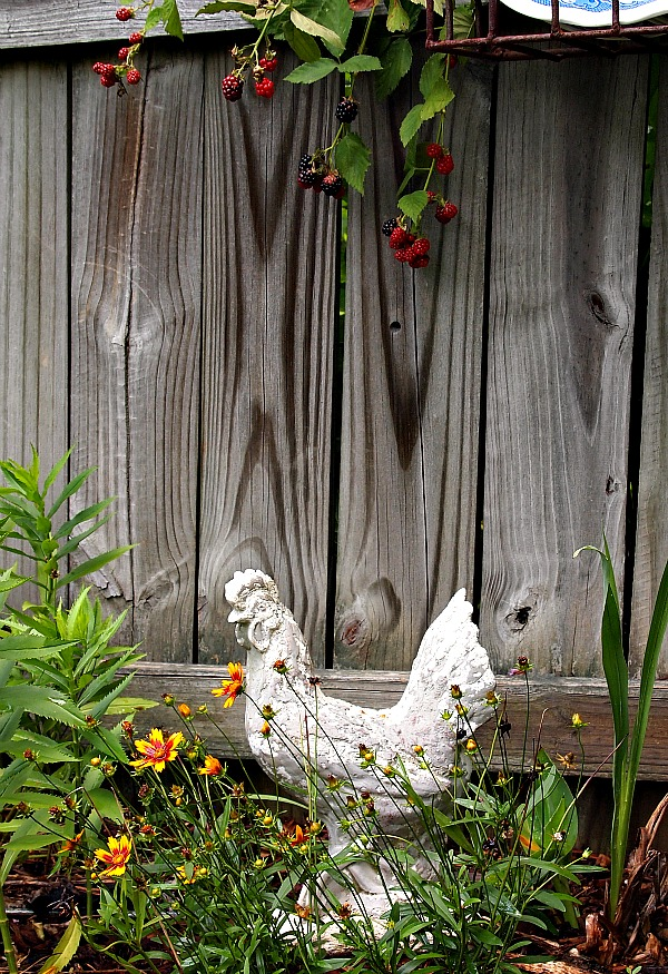 a concrete chicken in the vegetable garden